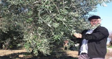 Zeytin ağaçlarını Afrin şehitlerinin ailelerine hediye etti