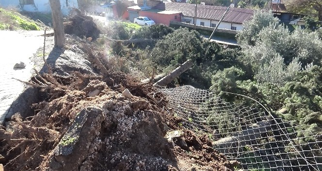 Kırıkhan'da ağaçlar devrildi  hasara yol açtı