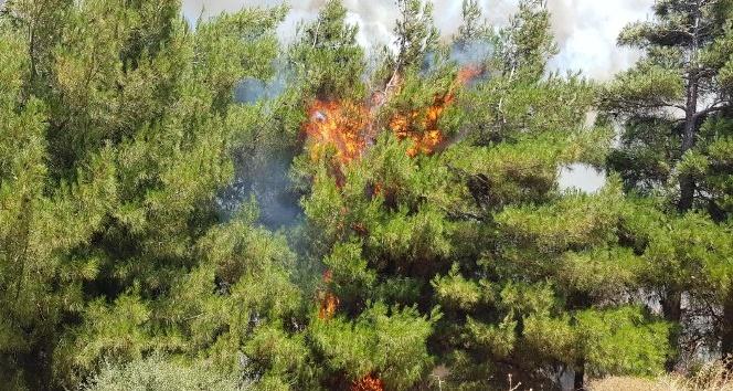 Ormana atılan çöpler yangına neden oldu
