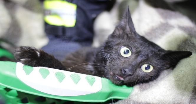 Günlerdir boynundaki kavanozla yaşayan kedi sonunda kurtarıldı