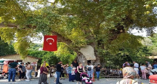 """Musa Ağacı"""" turizmi"""