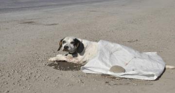Yaralı köpeğe vicdanlı sürücü sahip çıktı