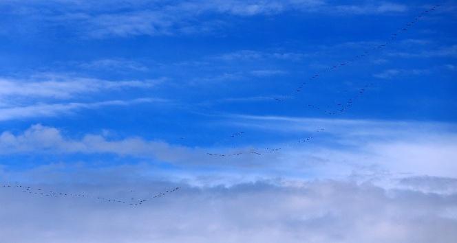 Baharın müjdecisi göçmen kuşların uzun yolculuğu