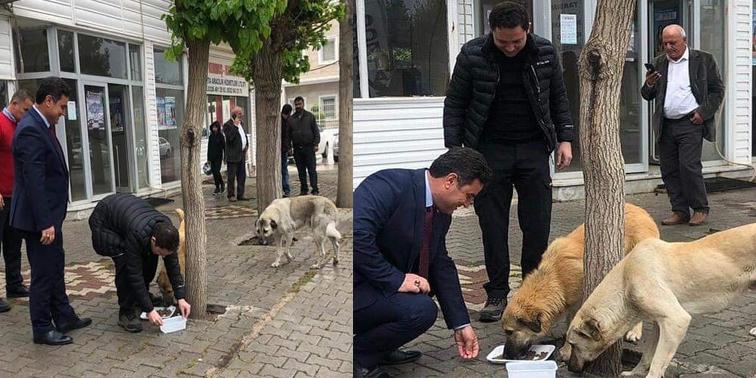 Kumlu'da Kaymakam Ve Belediye Başkanı hayvanlar için sokaklara mama bıraktı