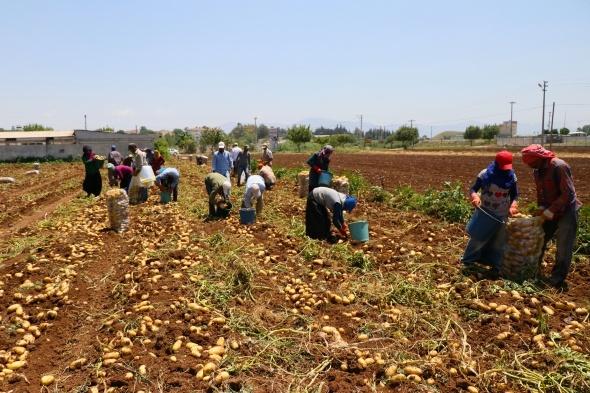 Mevsimlik tarım işçileriyle ile ilgili tedbirler alındı
