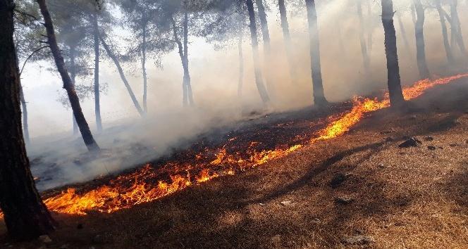 Kırıkhan'da 40 dönümlük kızılçam bitki örtüsü yandı