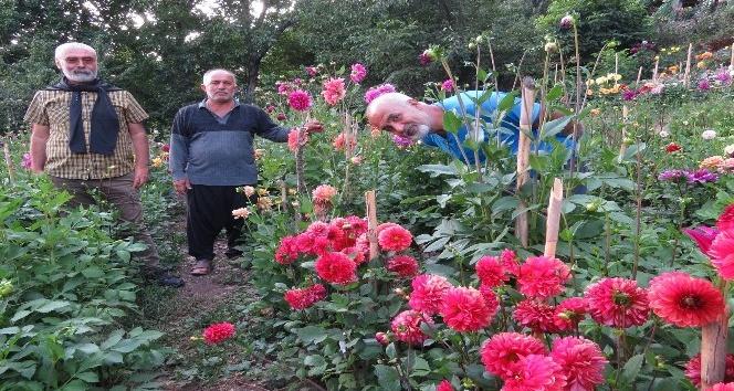 Anavatanı Meksika, Amanoslar'da yetişiyor