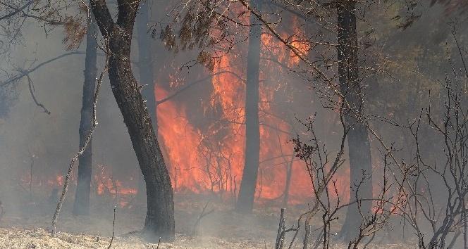 Hatay'da orman yangını: 3 hektar alan zarar gördü