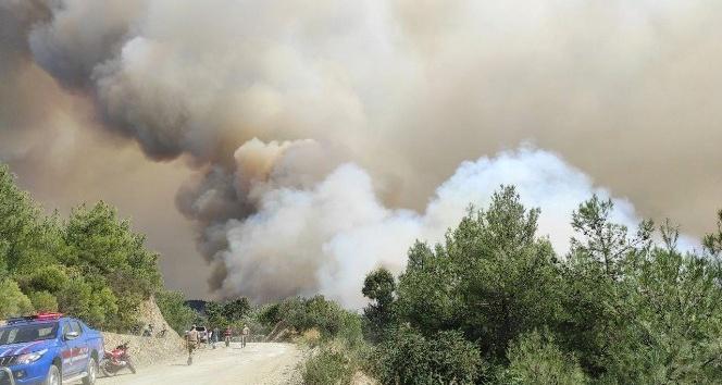 Samandağ'daki orman yangını büyüyerek devam ediyor