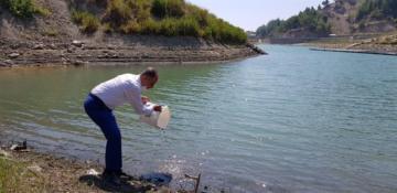 Hatay'da Göl Ve Göletlerine 94.000 Adet Sazan Yavrusu Bırakıldı