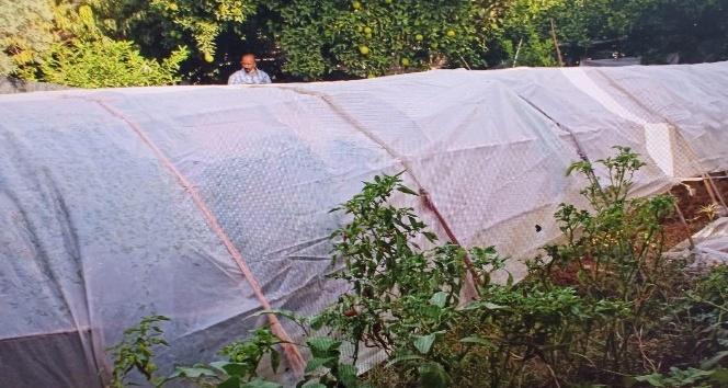 Kenevir yetiştirmek için bahçesine sera kurmuş