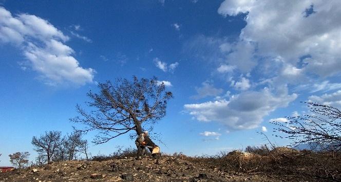 Hatay'da 1 milyon 563 bin fidan toprakla buluşacak