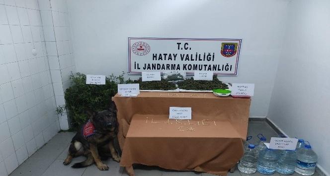 Defne'de Jandarmadan uyuşturucu operasyonu: 1 gözaltı
