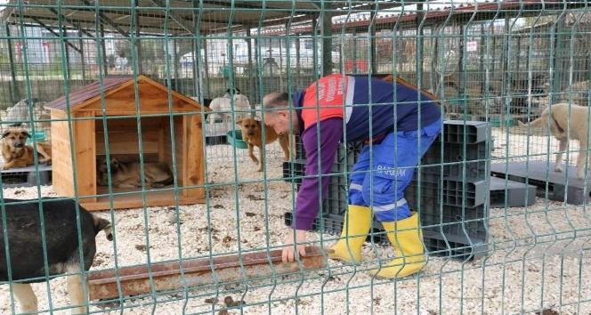 Hatay Büyükşehir Belediyesi, Yayladağı'na yeni hayvan barınağı açıyor