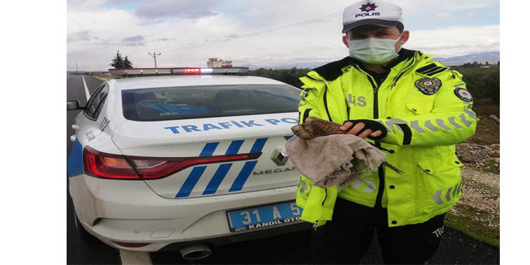 Trafik ekibi yol kenarında yaralı atmaca buldu