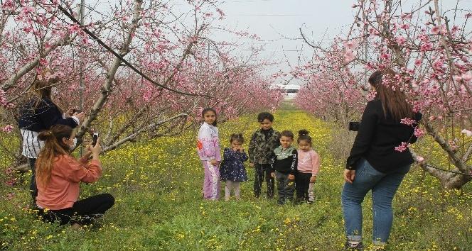 Badem ağaçları çiçek açtı vatandaşlar bahçelere akın etti