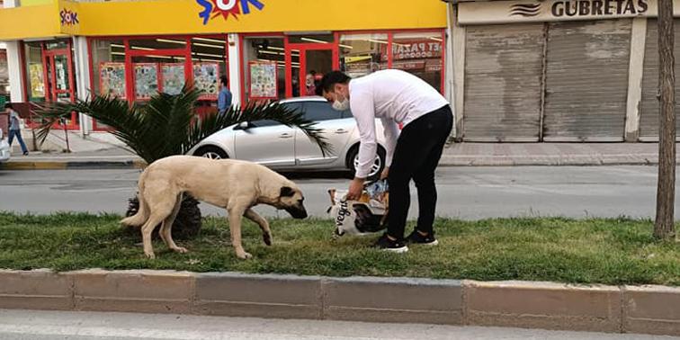 Kırıkhan'da Sokaktaki Canlar Unutulmuyor