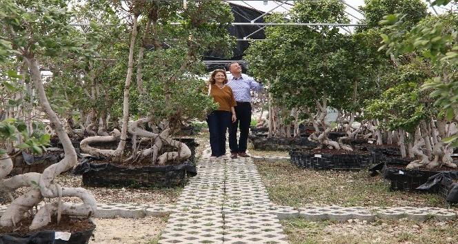 Hatay'da kadınlar süs bitkisi yetiştirecek