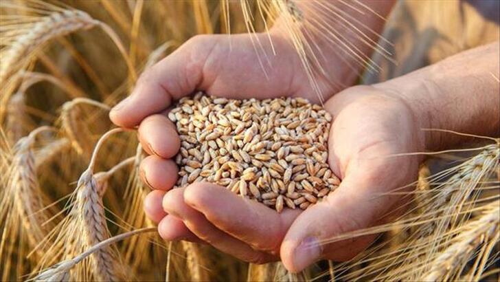Buğday Taban Fiyatı 2250 tl oldu