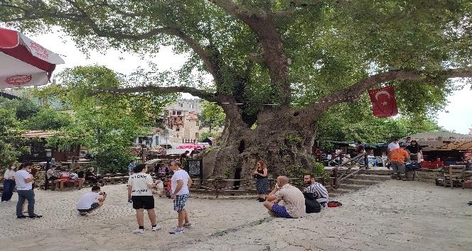 """""""Musa Ağacı""""na ziyaretçi akını"""