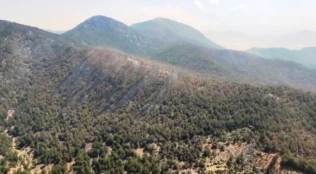 Hassa'da orman yangını üçüncü gün kontrol altına alındı