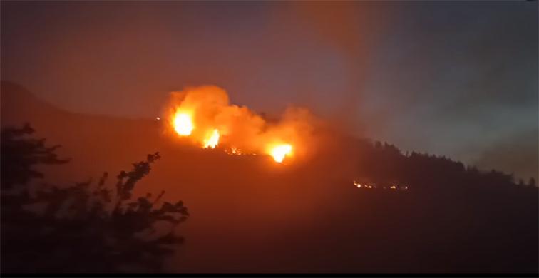 Alibeyçağıllı'da orman yangını