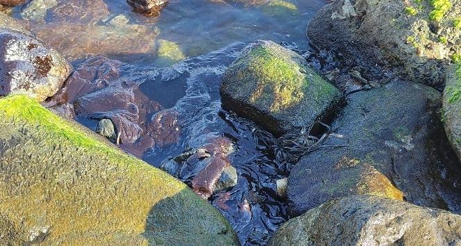 Hatay'da sahile vuran petrol atıklarına rağmen denizde yüzdüler
