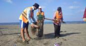 Samandağ sahilinde  petrol temizliği sürüyor