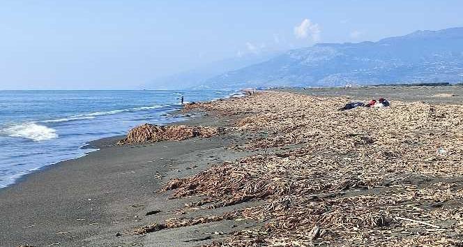 Samandağ sahilinin krizi bitmiyor
