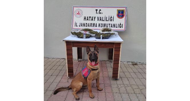 Kırıkhan'da uyuşturucu operasyonuna 1 tutuklama
